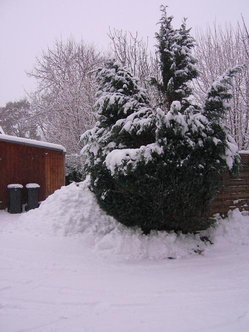 Podcast zur Adventzeit – Teil 2