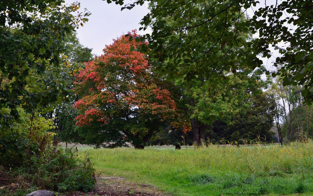 Herbst-Impressionen II